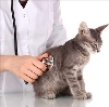 Ветеринарные клиники в Туринске
